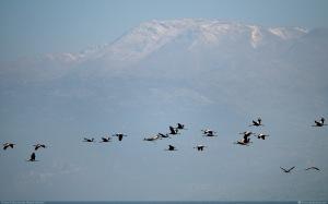 free_israel_photos_cranes_over_hermon_1920