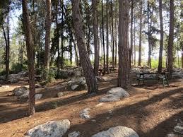 biriya forest1