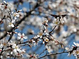 blossomingtree