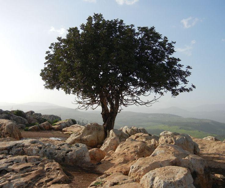 Aliyah to Israel